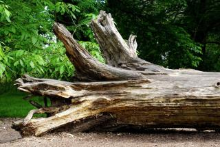 High Court finds Council liable in negligence for damage from fallen tree